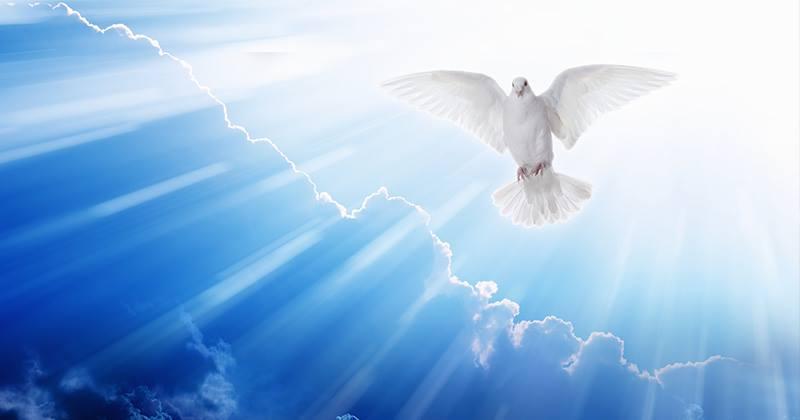 Holy Spirit Descending as a Dove DonMcElyea.Com